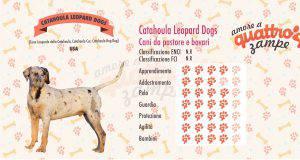 Catahoula Leopard Dogs scheda razza