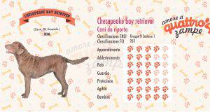 Chesapeake bay retriever scheda razza