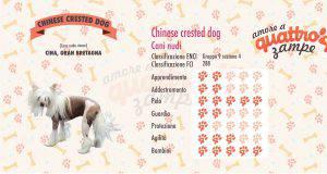 Chinese crested dog scheda razza