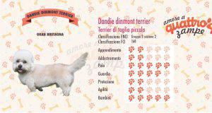 Dandie dinmont terrier scheda razza