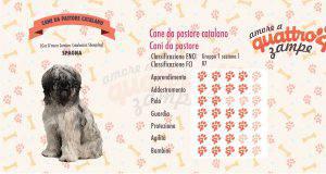 Cane da pastore catalano scheda razza