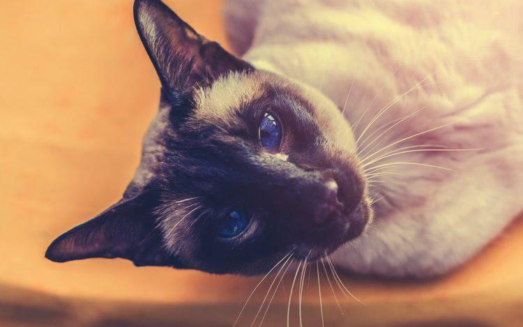 pelle secca gatto