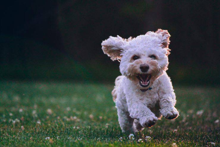 Fisioterapia per cani