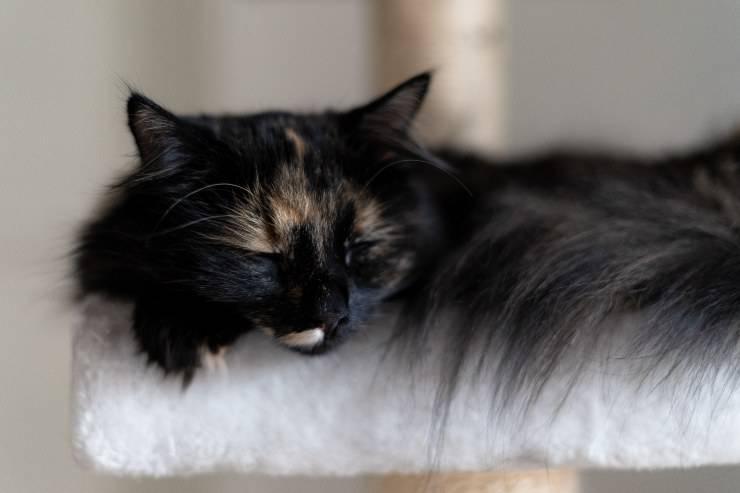 Come dorme il gatto