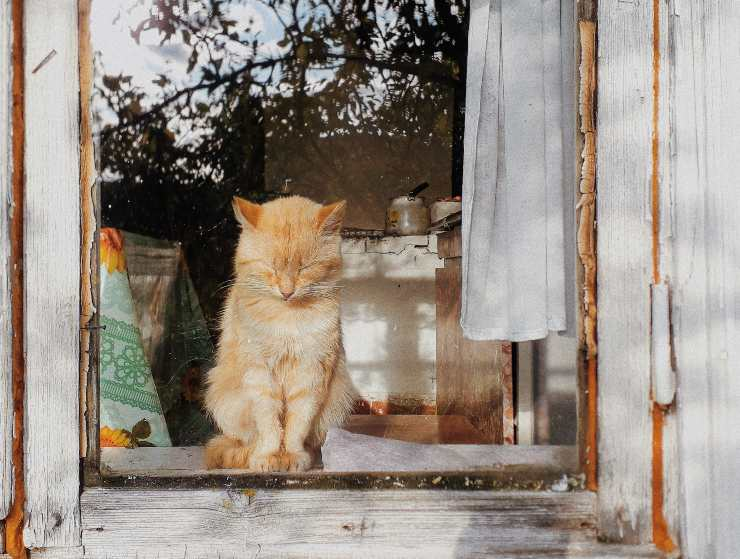 micio porta finestre