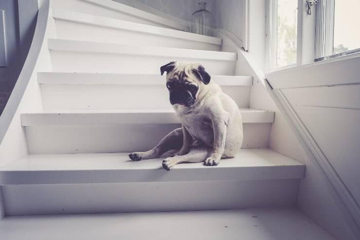 Prevenire l'ansia da separazione del cane
