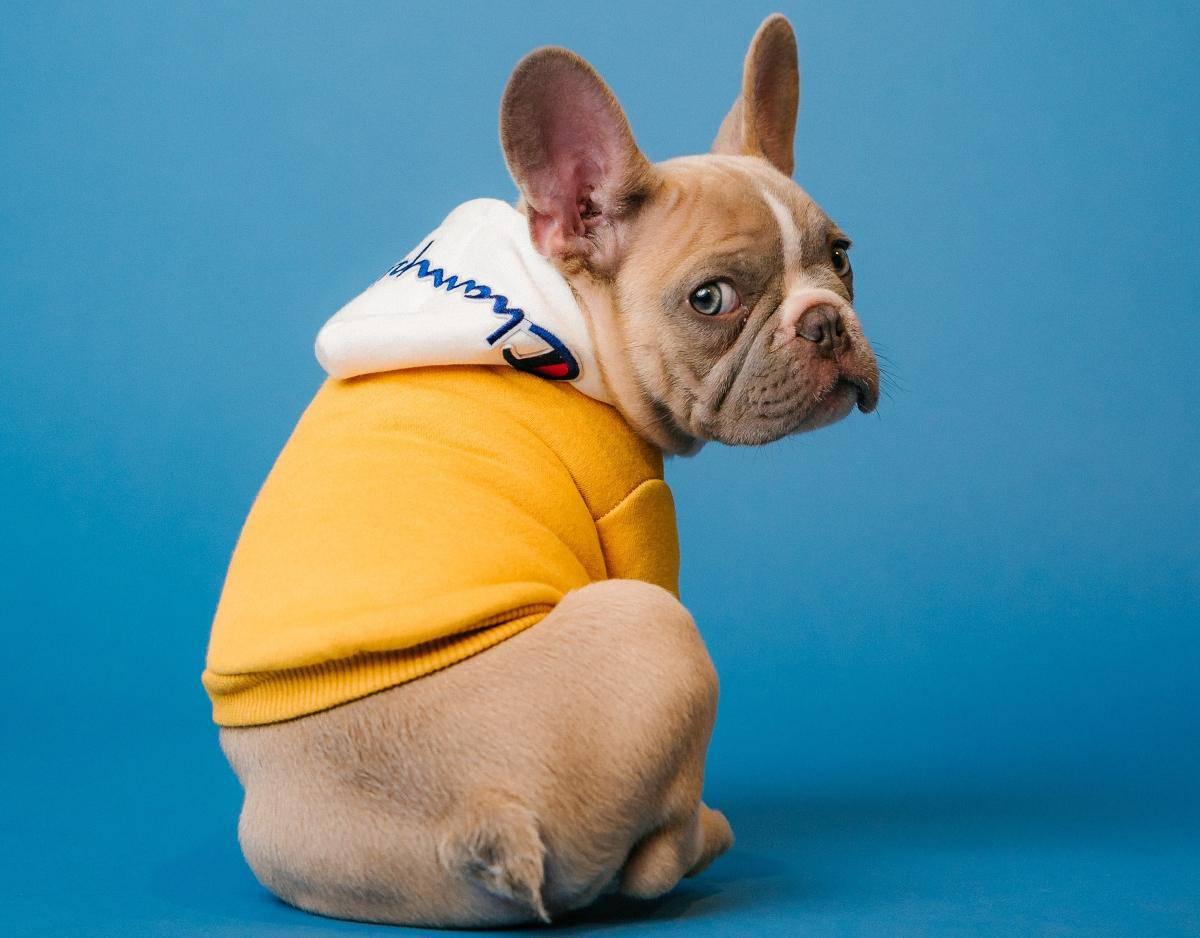 effetti collaterali dei vaccini del cane