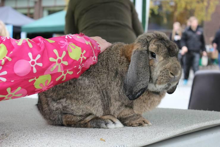 Bambina accarezza un coniglio