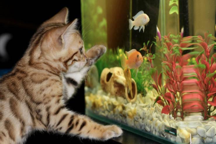 Troppo mangime ai pesci
