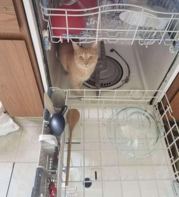 Gatto lavastoviglie