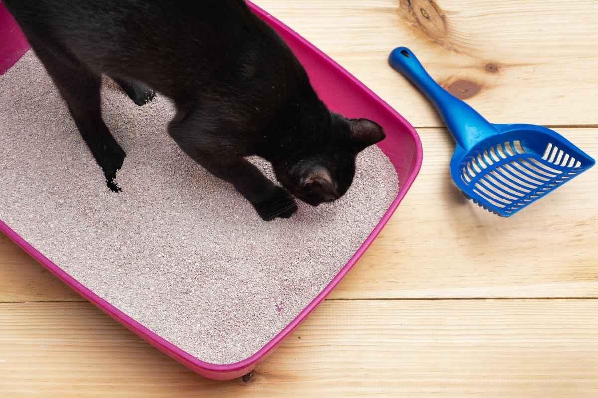 lettiera gatto adobestock