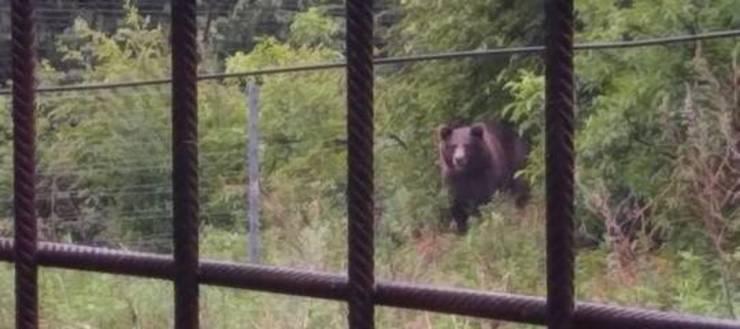 l'orso m 49