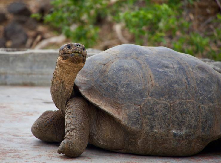 habitat per la tartaruga