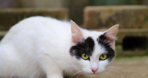 curiosità alimentazione gatto