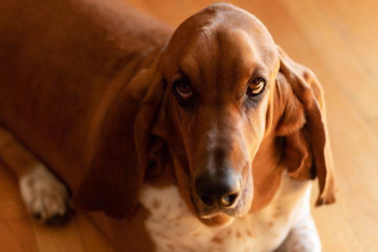 cane senso di colpa