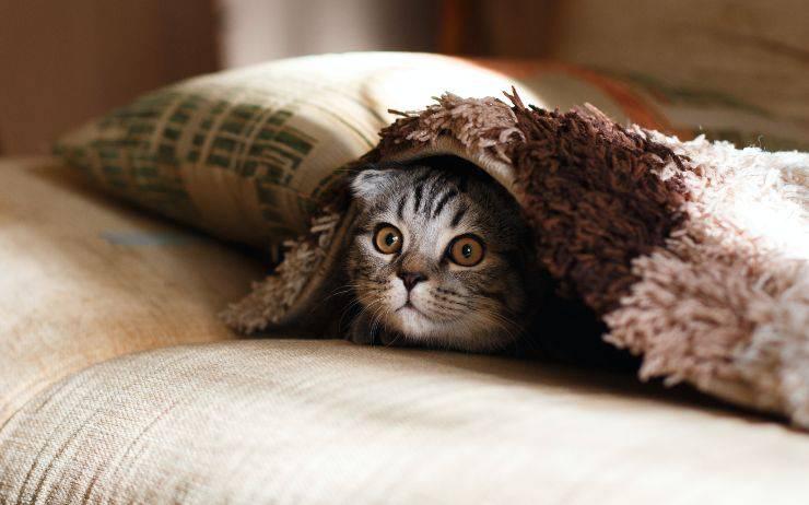 Gatto ama gli spazi piccoli