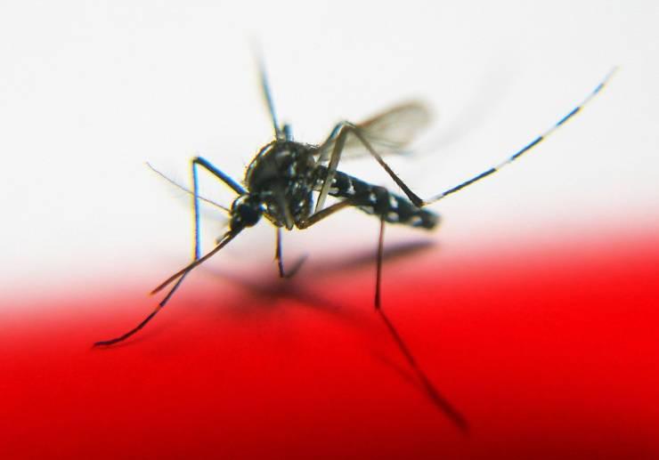 zanzara insetti più fastidiosi