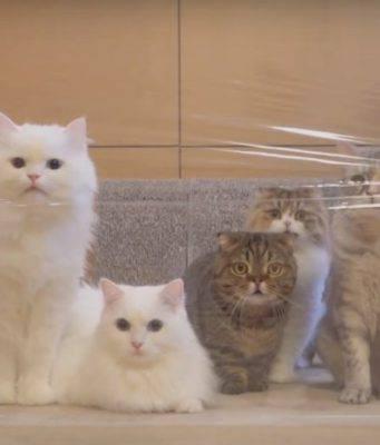 scherzi padroni gatti