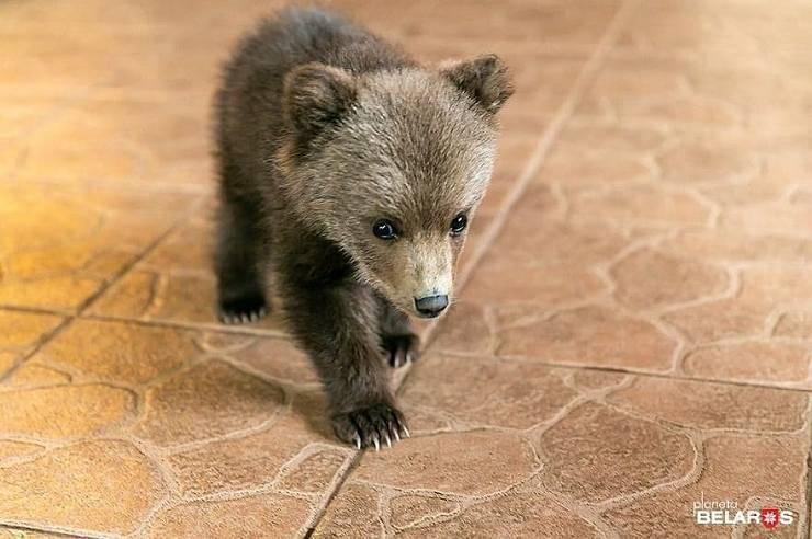 cucciolo orso salvato