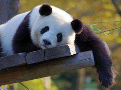 animali difficoltà bioparchi italia