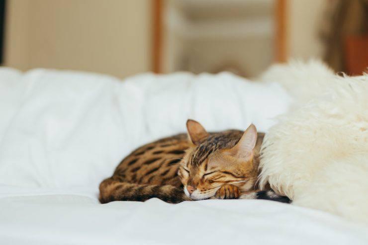 gatto dorme consigli gatti