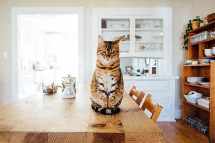 gatti elettrodomestici