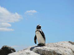 Il pinguino e l'idea del cammino (Foto Pixabay)