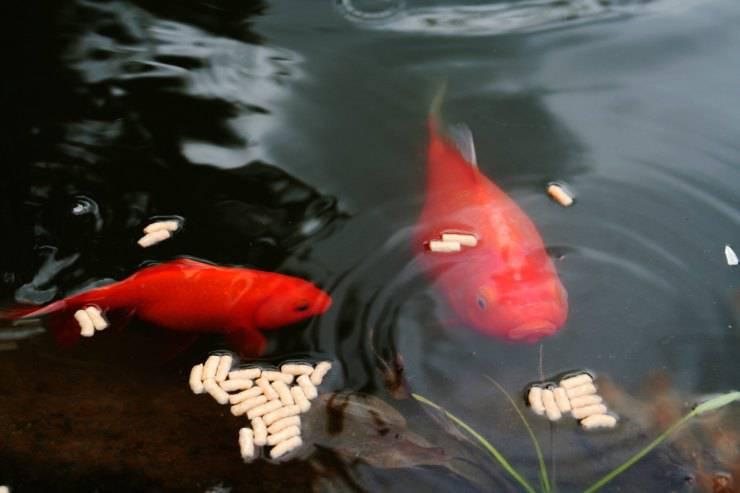 Il pesce non mangia