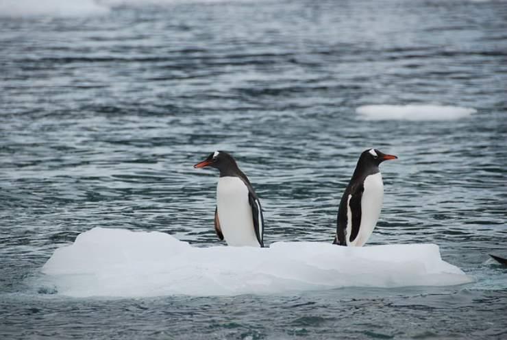 come fanno i pinguini a resistere al freddo