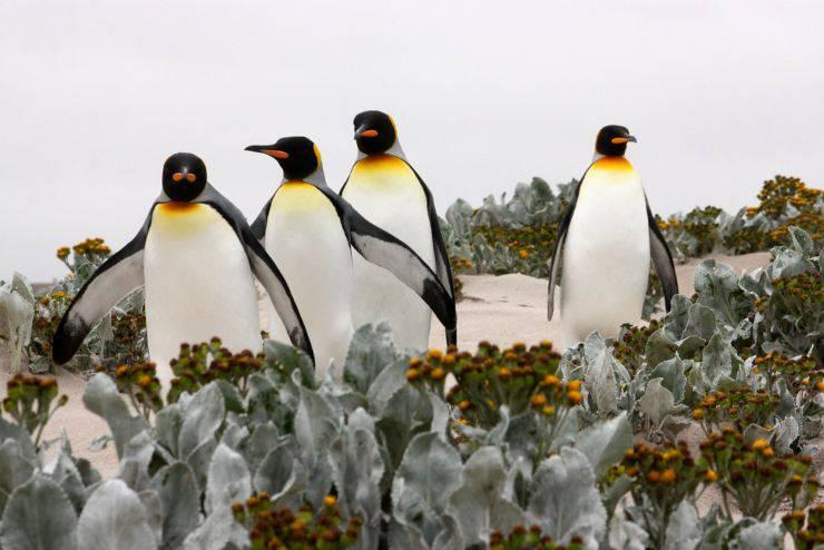 pinguini pinguino uccelli che non volano