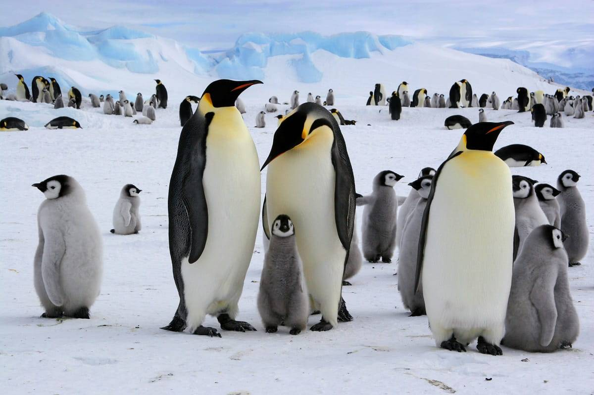 test pinguini
