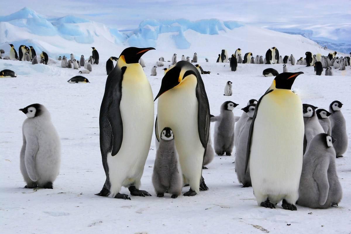 foto 2 pinguini test