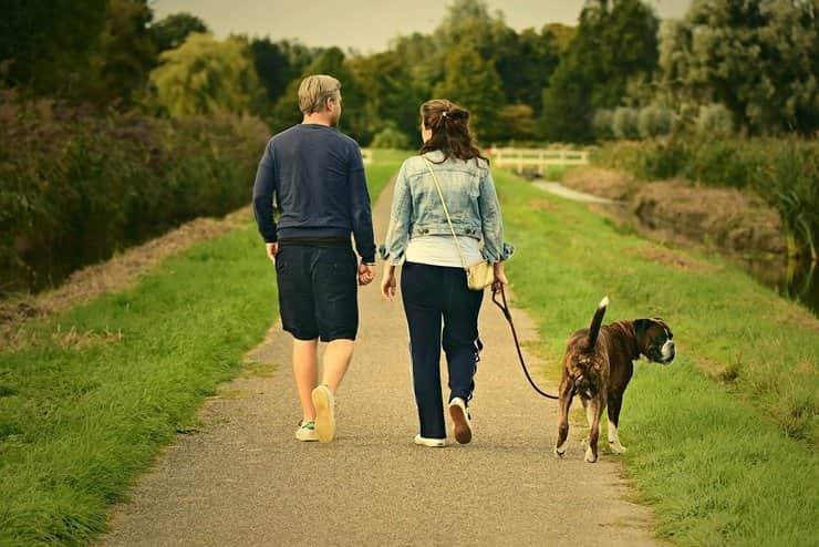 Nuova ordinanza per portare i cani a spasso