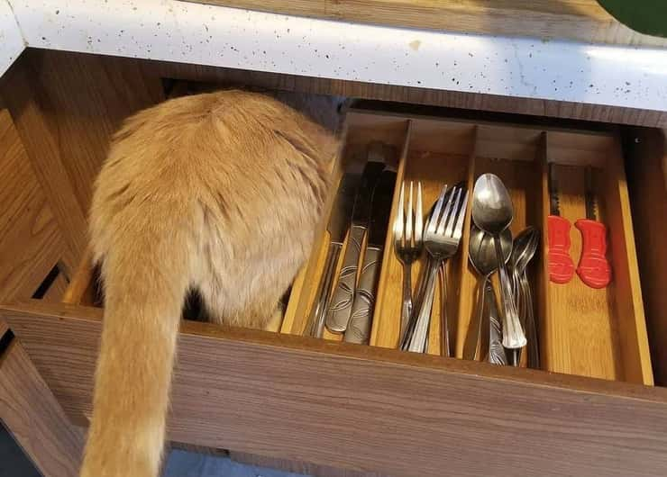 gatto posate
