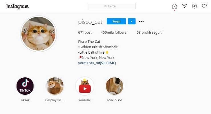 pisco profilo instagram
