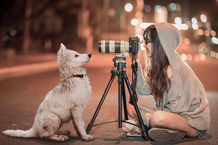 festival video animale domestico