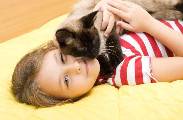 razze di gatti più affettuosi