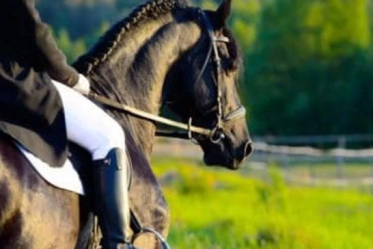 redini equitazione