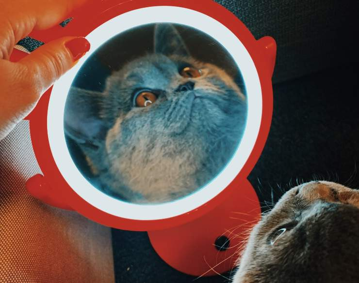 riflesso gatto