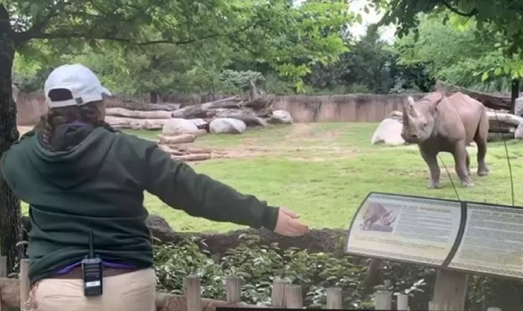 cucciolo rinoceronte net