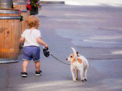 animali per bambini