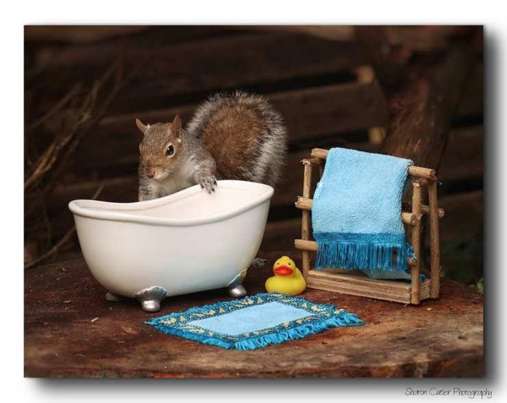vasca scoiattolo