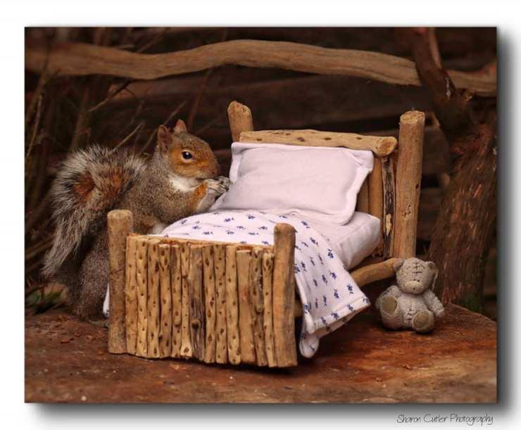 casa scoiattoli