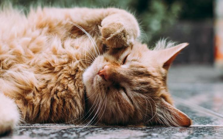 sintomi vecchiaia gatti