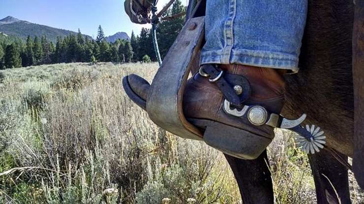 speroni per cavalli