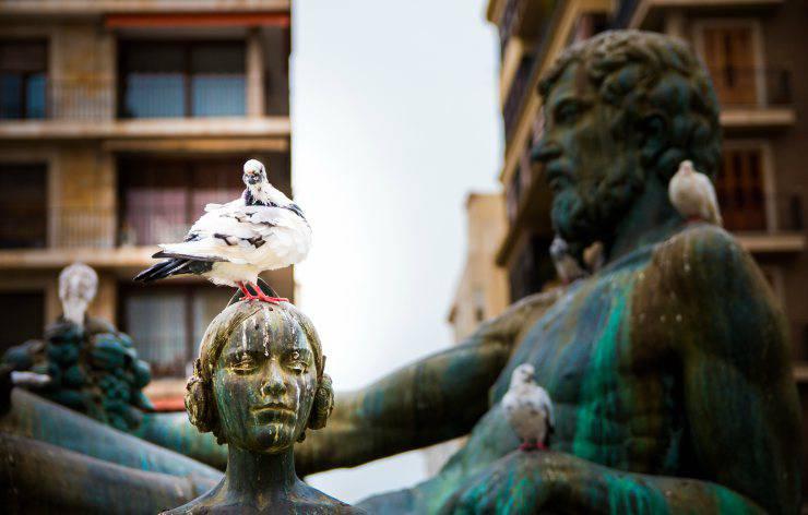 Perché la cacca degli uccelli è bianca