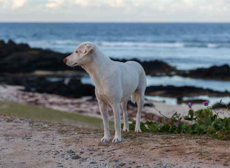 Il cane randagio vicino al mare (Foto Pixabay)