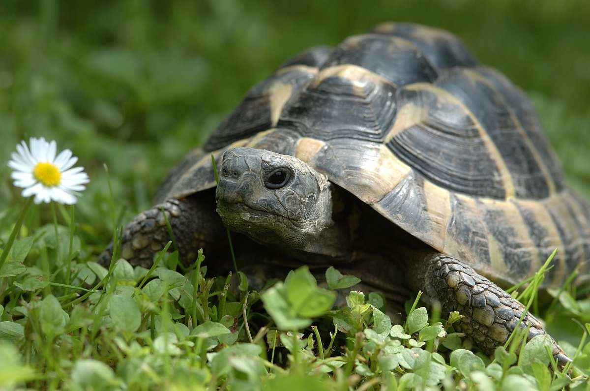tartaruga può mangiare frutta