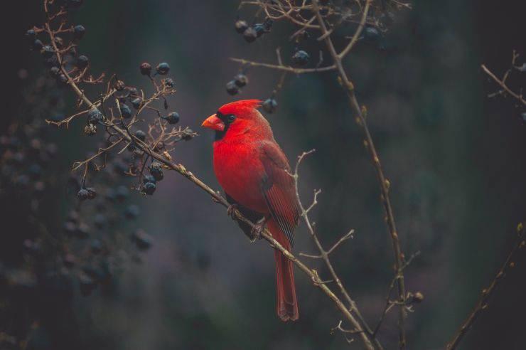 Curiosità sugli uccelli