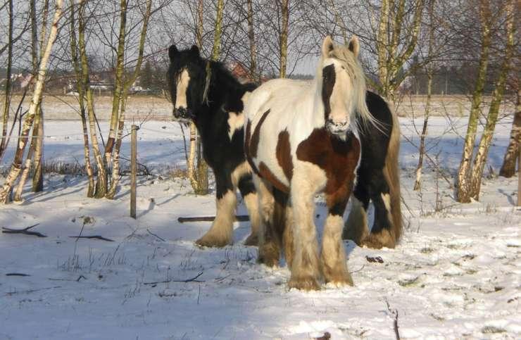 scioglimento permafrost cavalli